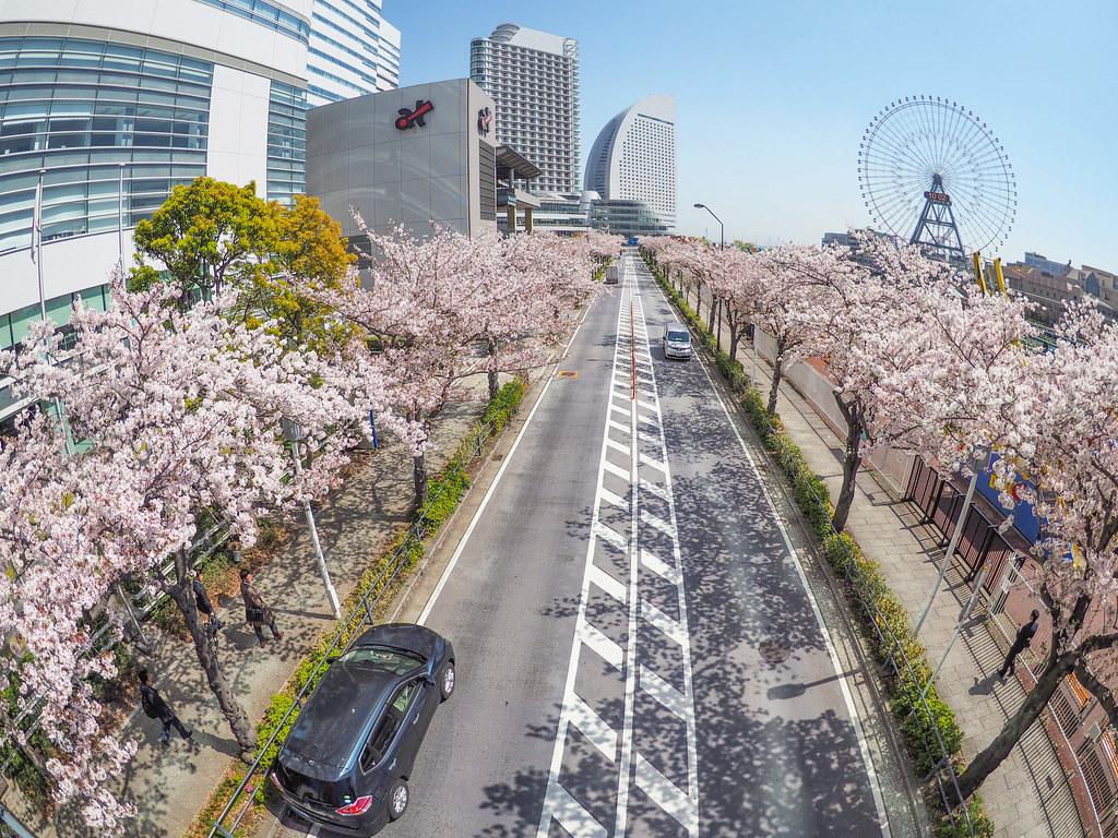 Yokohama Minatomirai Sakura-dori Ave.