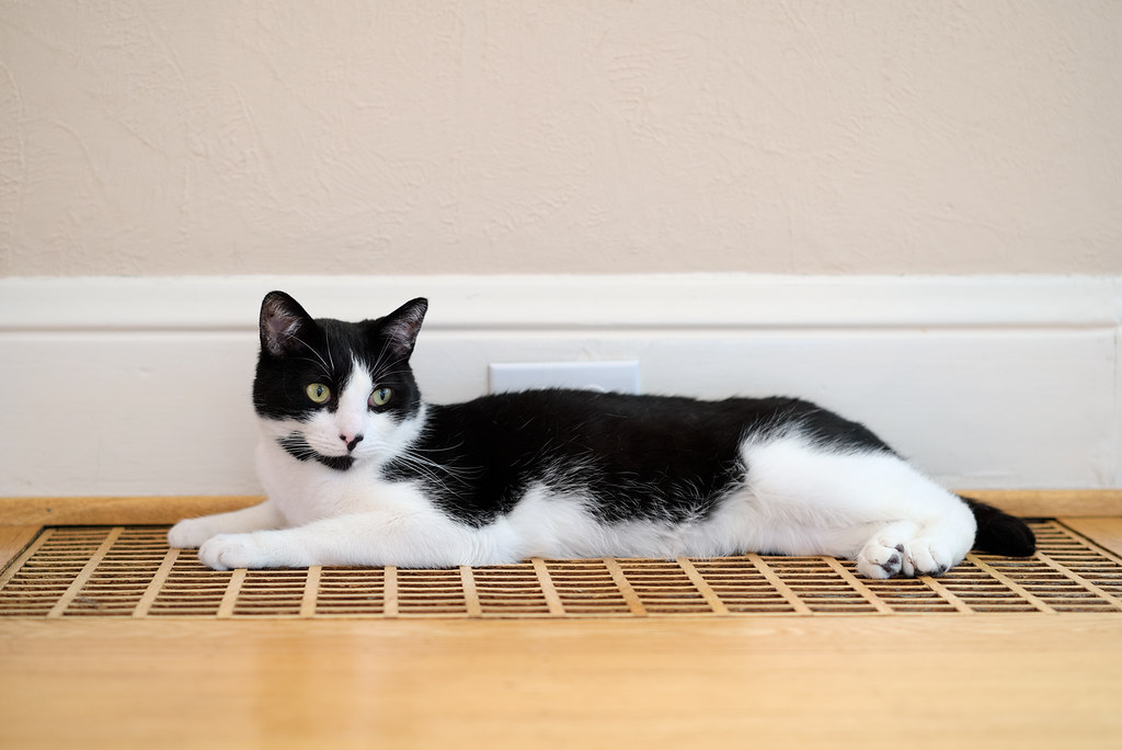 Our black-and-white cat Boo rests on the wooden heating vent