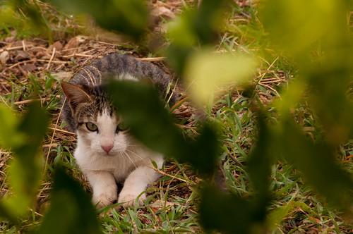 chicamocha colombia parquechicamocha santander cat gato