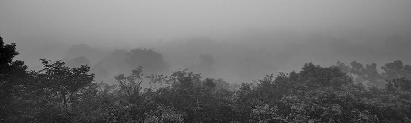 Good Morning Tikal - Tikal