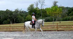 animal sports, equestrianism, english riding, eventing, dressage, mare, hunt seat, equestrian sport, equitation, horse,