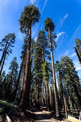 Kings Canyon & Sequoia - 145