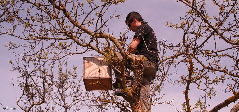 Placing a nest box within the