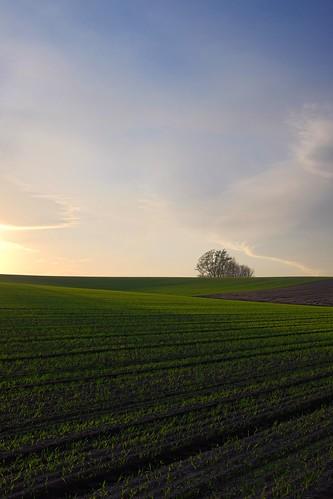 hokkaido 北海道 biei hydra hdr 美瑛 マイルドセブンの丘 丘 マイルドセブンの丘