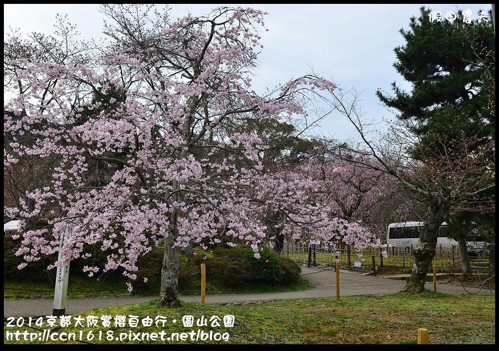 2014京都大阪賞櫻自由行.圓山公園DSC_9966