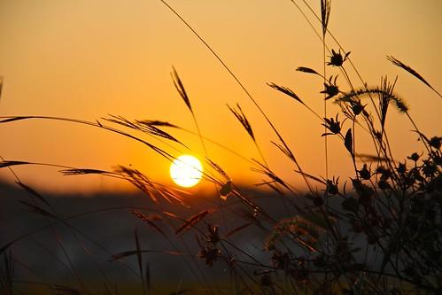 china autumn sunset nature grass leaf hunan liuyang eos60d