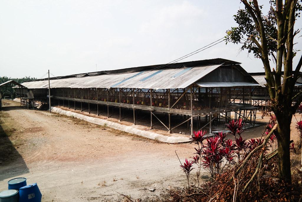Toh Thye San Farm