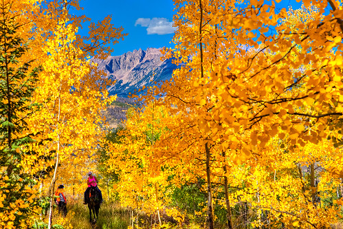 autumn trees people mountains fall nature animals forest landscape scenery colorado seasons view nationalforest aspens rockymountains coloradorockies forestserviceemployees