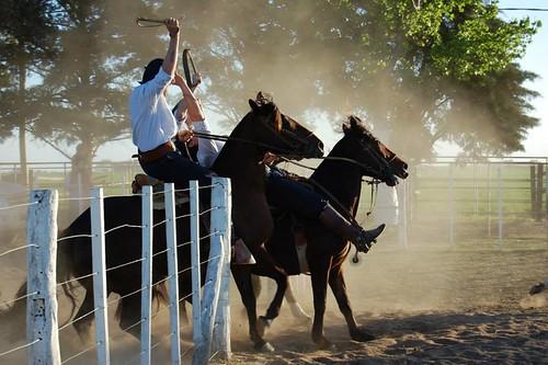 Resultado de imagen para caballos criollos fm 2000