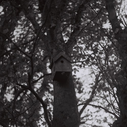 Birdhouse Not A Soul
