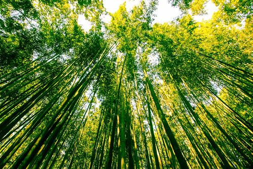 japan kyoto bamboo arashiyama 日本 nippon 嵐山 京都市