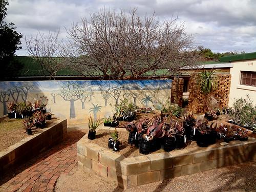 Черенки понравившихся растений, выращенные в питомнике ботанического сада, можно приобрести в магазинчике при офисе