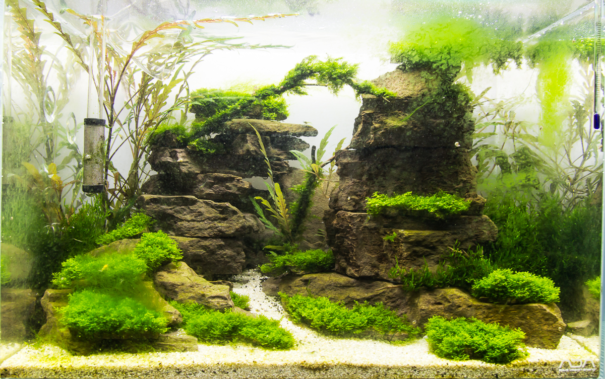 Aquascape No. 2 - ADA 45P - Moss Canyon II - The Planted ...