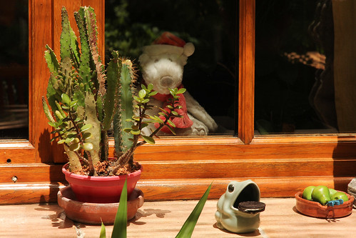 cactus france window garden europe view jardin july aixenprovence paca frog patio provence bloomingdales oreo fenêtre 2014 bouchesdurhône oreocookie meteorry provencealpescôtedazur provencealpescôted'azur paysdaix mrbloomingdales misterbloomingdales lamérindole routedelatourd'arbois