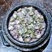 蚵仔石鍋飯