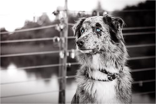Kjara Kocbek Animal Photography 15445786350_577e421fc0