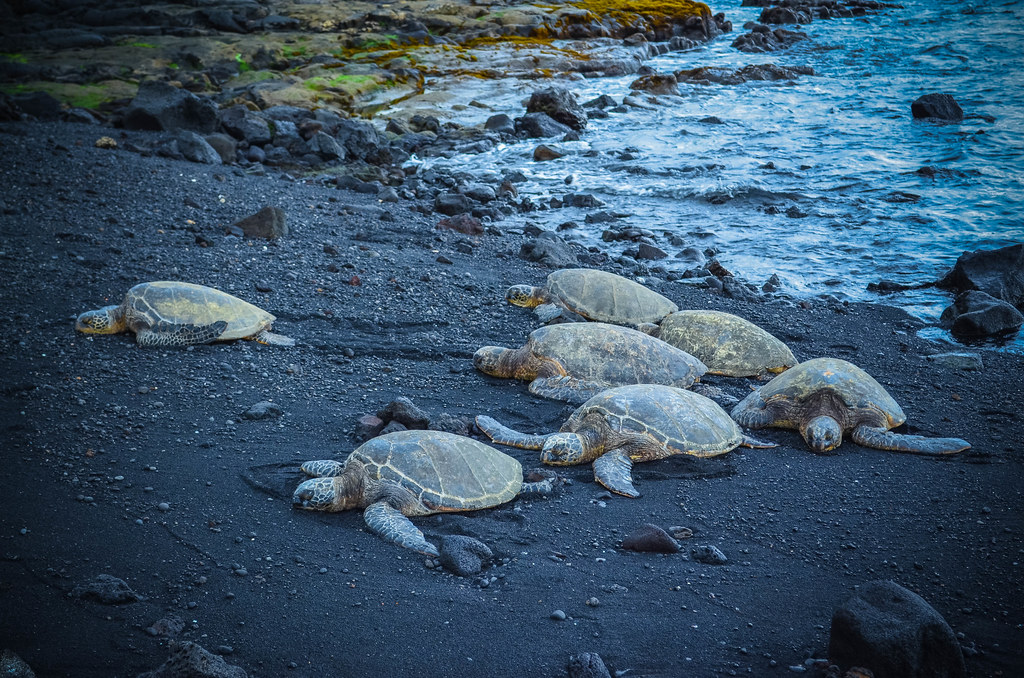 Turtles at rest