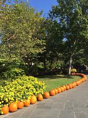 Visiting Texas: Autumn at the Arboretum