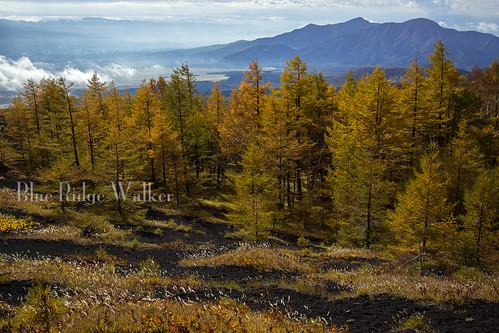 fallcolor 富士山 mtfuji