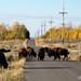 Jackson Hole-Teton Area