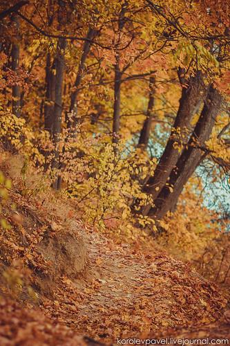 Autumn-224