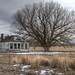 Old Jordan Valley House and Tree by thomj41