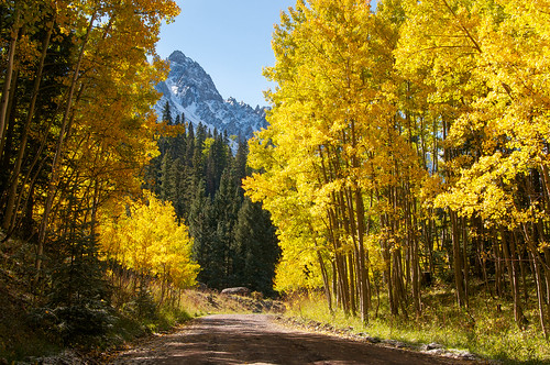 Golden Aspen Road