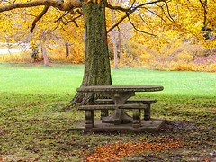 Fall-Picnic-Spot