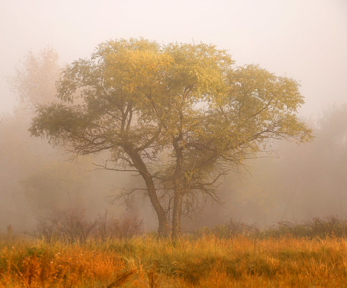 fall sunrise colorado foggy ashtree riversidepark 70d vertorama ptphoto lightroom5 pse12