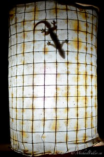 Gecko on a lamp