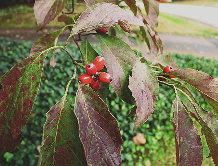 autumn finds