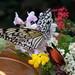 Bunte Welt im Schmetterlingshaus auf der Insel Mainau