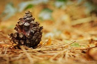 autumnal 43/52