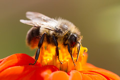 insects-10-25-2014-62.jpg