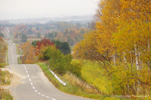晩秋の路のゆく
