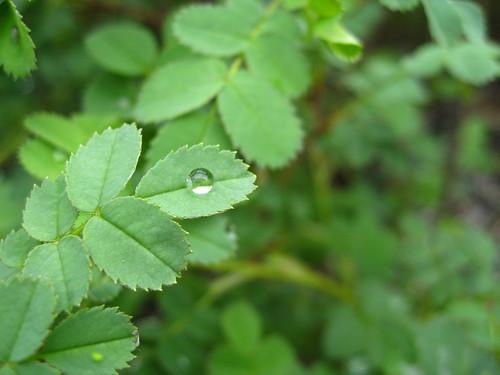 Raindrop_inspiration 1_15cm
