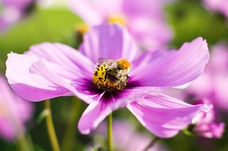 The november Bee