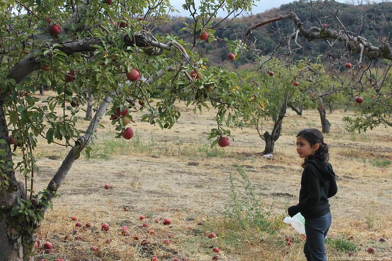 Temporada de manzanas Oak Glen California