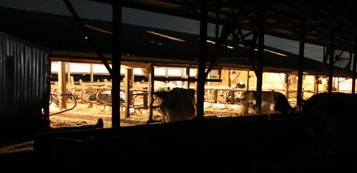 291/365 Night Time Cow Barn