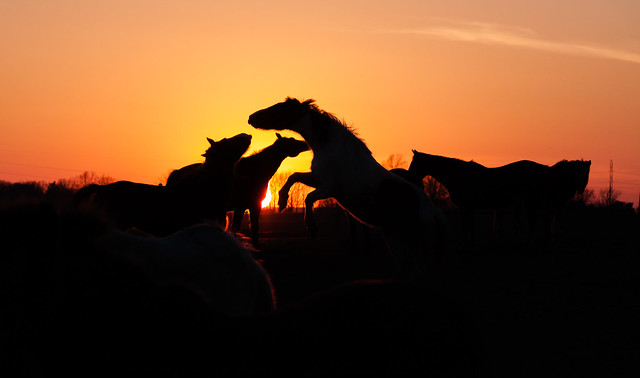Majestic Sunset, Canon EOS 50D, Canon EF-S 18-135mm f/3.5-5.6 IS STM