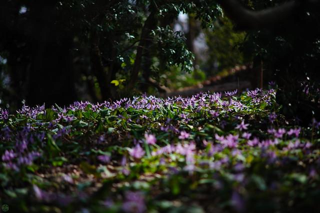 20170402-DS7_2137.jpg, Nikon D700, AF Zoom-Nikkor 70-210mm f/4