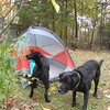 Conrad and Homer #campingwithdogs, #adventureartist