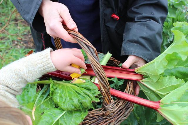 seedlingsbasket