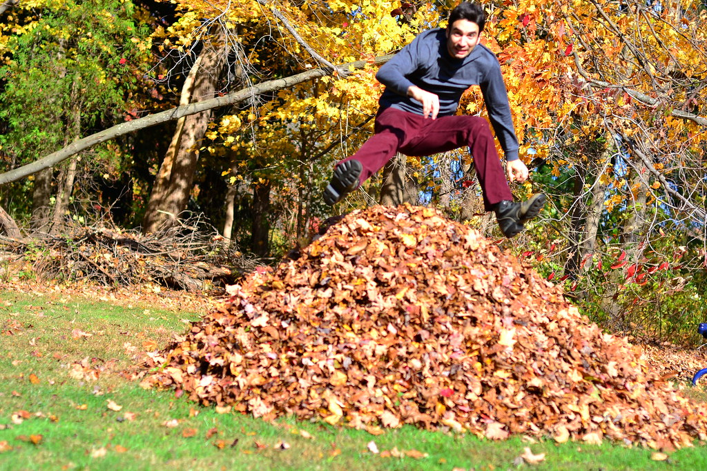 jumping leaves by Nick Chapman