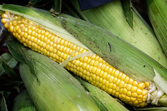 plant(0.0), dish(0.0), crop(0.0), sweet corn(1.0), food grain(1.0), vegetarian food(1.0), maize(1.0), corn on the cob(1.0), produce(1.0), food(1.0), corn on the cob(1.0), cuisine(1.0),