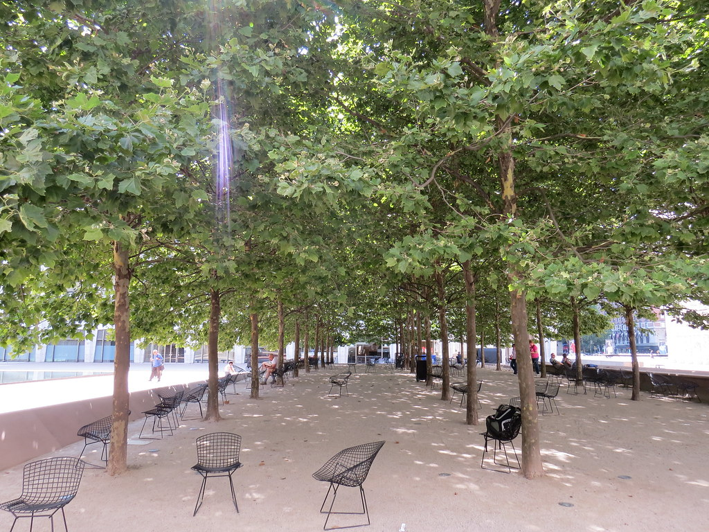 Trees At Lincoln Center Bosque New York City New York 20