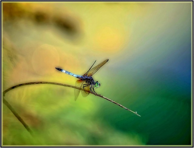 The Dragon Fly copy