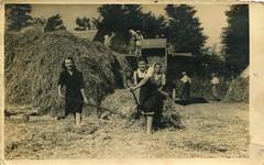 Vršenje žita (Horvatić)