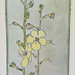 Moth Mullein Watercolor