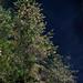 Trees por Blas Torillo